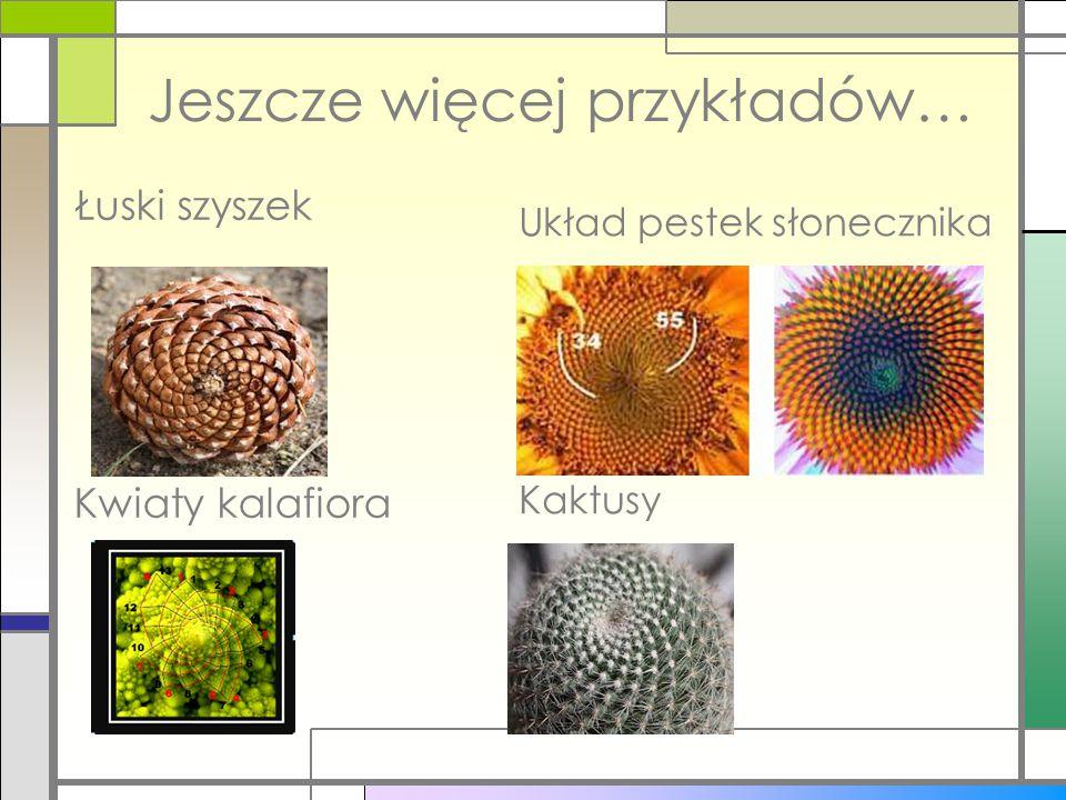 Jeszcze więcej przykładów… Łuski szyszek Kwiaty kalafiora Układ pestek słonecznika Kaktusy
