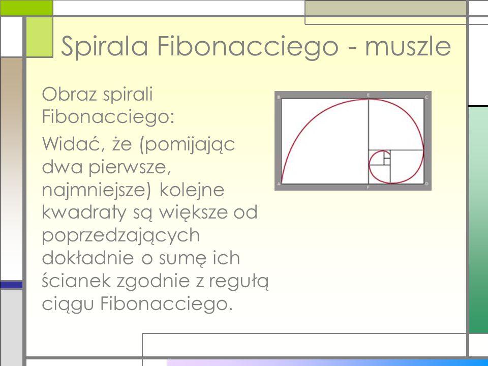 Obraz spirali Fibonacciego: Widać, że (pomijając dwa pierwsze, najmniejsze) kolejne kwadraty są większe od poprzedzających dokładnie o sumę ich ściane