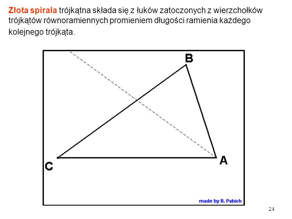 24 Złota spirala trójkątna składa się z łuków zatoczonych z wierzchołków trójkątów równoramiennych promieniem długości ramienia każdego kolejnego trójkąta.