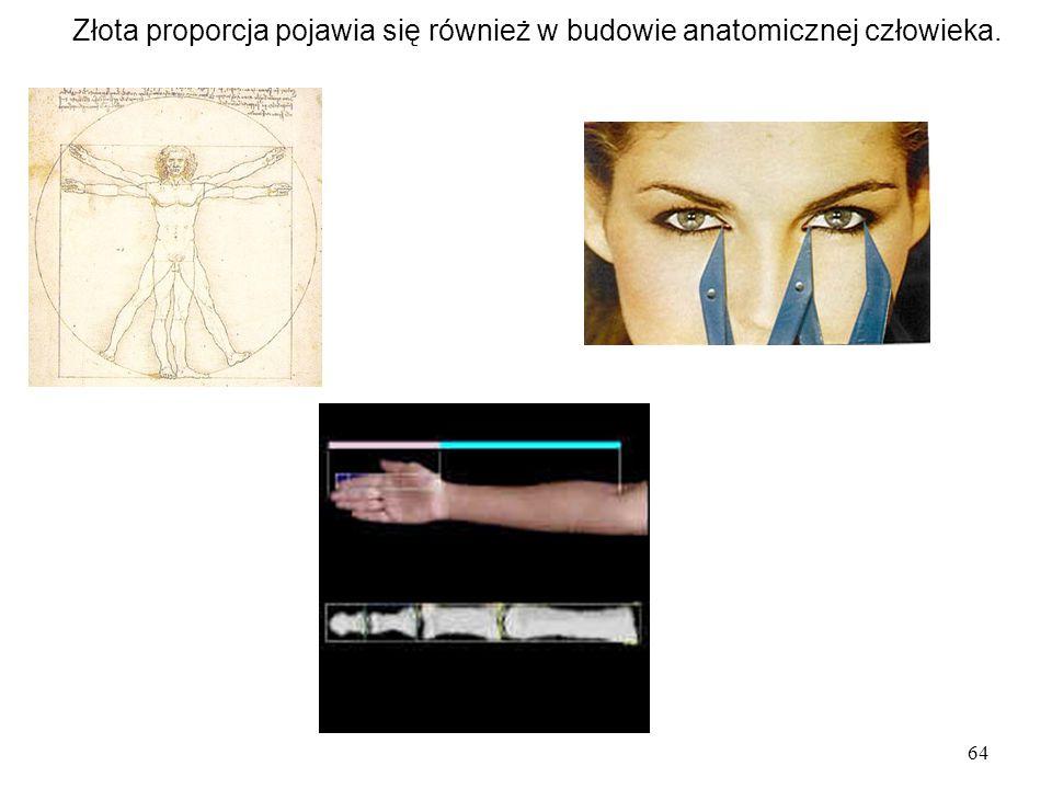 64 Złota proporcja pojawia się również w budowie anatomicznej człowieka.