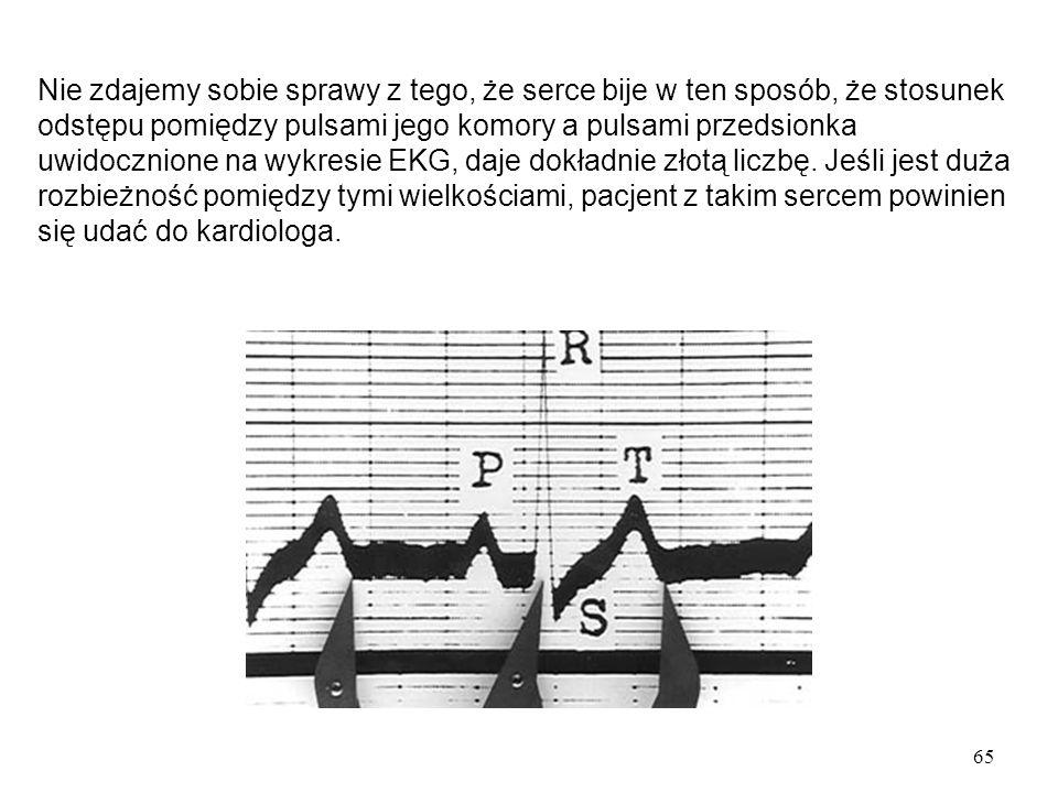 65 Nie zdajemy sobie sprawy z tego, że serce bije w ten sposób, że stosunek odstępu pomiędzy pulsami jego komory a pulsami przedsionka uwidocznione na wykresie EKG, daje dokładnie złotą liczbę.