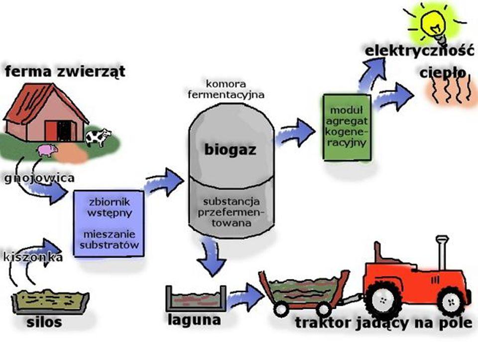 Spalanie biomasy jest uważane za korzystniejsze dla środowiska niż spalanie paliw kopalnych, gdyż zawartość szkodliwych pierwiastków (przede wszystkim siarki) w biomasie jest dużo niższa, a tworzący się w procesie spalania dwutlenek węgla jest zamieniany na biomasę przez kolejne pokolenia organizmów żywych wytwarzających biomasę, które następnie są znowu spalane itd.