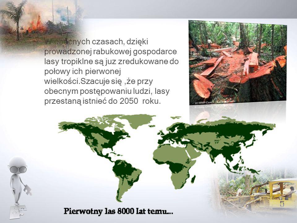 W obecnych czasach, dzięki prowadzonej rabukowej gospodarce lasy tropiklne są juz zredukowane do połowy ich pierwonej wielkości.Szacuje się,że przy ob