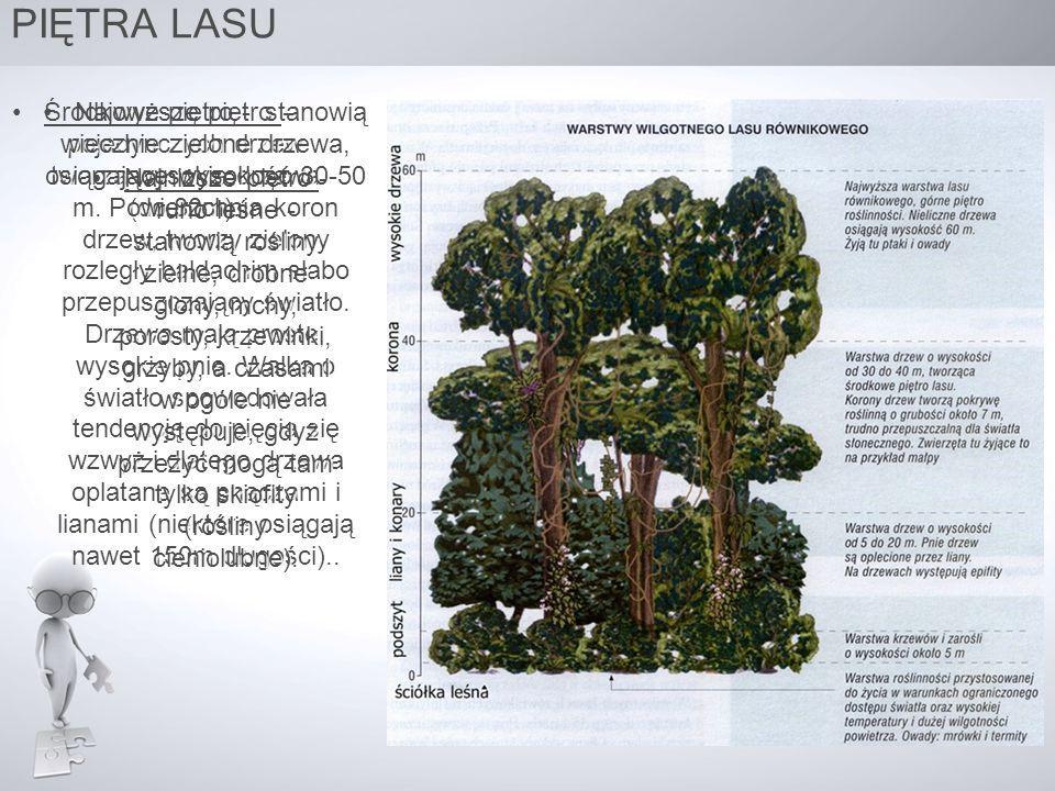 PIĘTRA LASU Najwyższe piętro – pojedynczych drzew tworzą wysokie drzewa (do 80m). stanowią wiecznie zielone drzewa, osiągające wysokość 30-50 m. Powie