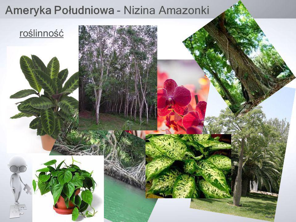 Ameryka Południowa - Nizina Amazonki roślinność