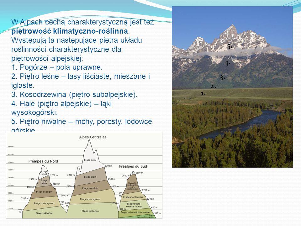 W Alpach cechą charakterystyczną jest też piętrowość klimatyczno-roślinna.