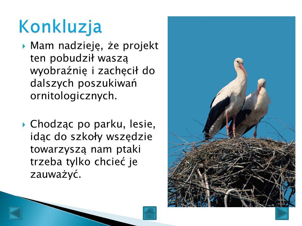  Mam nadzieję, że projekt ten pobudził waszą wyobraźnię i zachęcił do dalszych poszukiwań ornitologicznych.  Chodząc po parku, lesie, idąc do szkoły