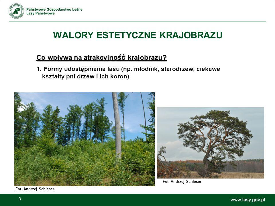 3 WALORY ESTETYCZNE KRAJOBRAZU Co wpływa na atrakcyjność krajobrazu? 1. Formy udostępniania lasu (np. młodnik, starodrzew, ciekawe kształty pni drzew