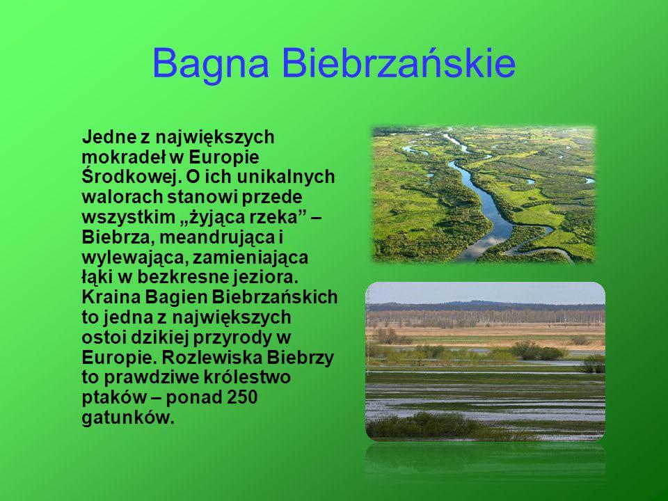 """Bagna Biebrzańskie Jedne z największych mokradeł w Europie Środkowej. O ich unikalnych walorach stanowi przede wszystkim """"żyjąca rzeka"""" – Biebrza, mea"""