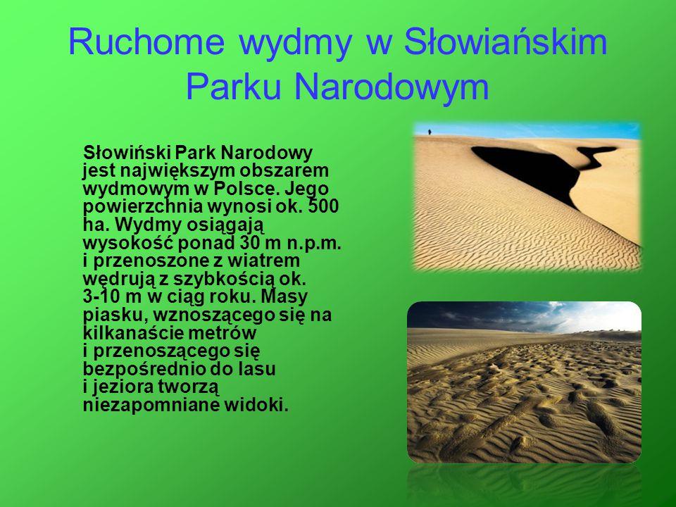 Ruchome wydmy w Słowiańskim Parku Narodowym Słowiński Park Narodowy jest największym obszarem wydmowym w Polsce. Jego powierzchnia wynosi ok. 500 ha.