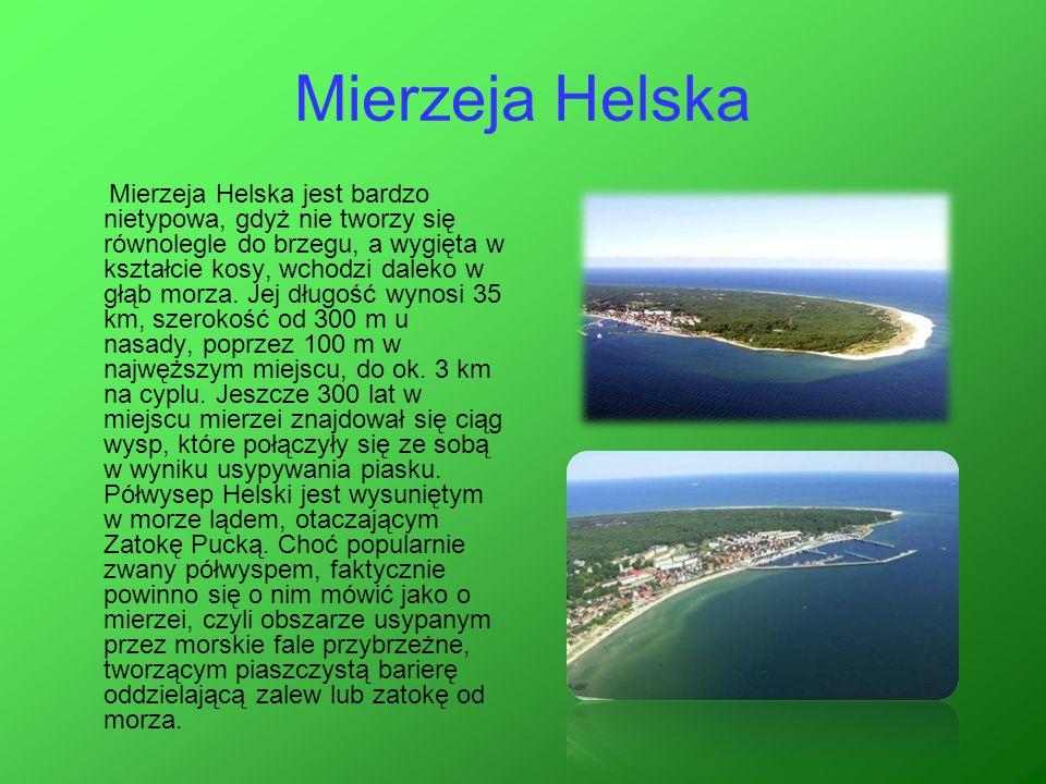 Mierzeja Helska Mierzeja Helska jest bardzo nietypowa, gdyż nie tworzy się równolegle do brzegu, a wygięta w kształcie kosy, wchodzi daleko w głąb mor