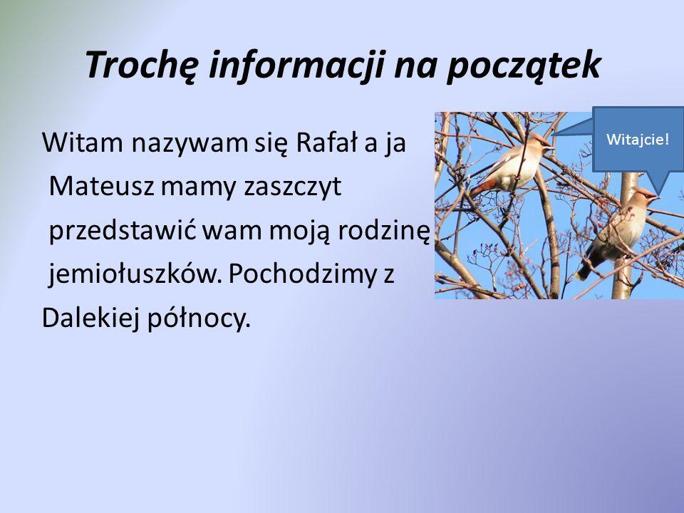 Trochę informacji na początek Witam nazywam się Rafał a ja Mateusz mamy zaszczyt przedstawić wam moją rodzinę jemiołuszków.