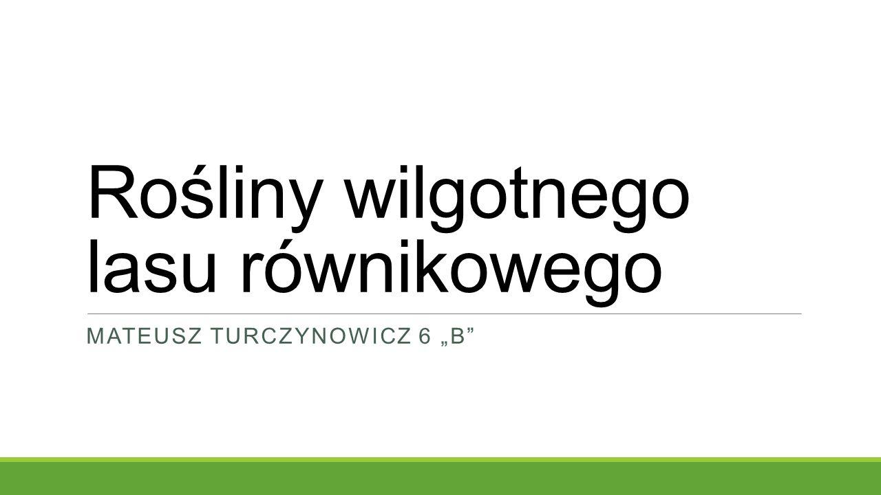 """Rośliny wilgotnego lasu równikowego MATEUSZ TURCZYNOWICZ 6 """"B"""""""