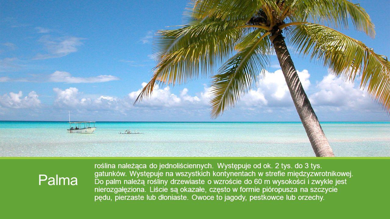 Palma roślina należąca do jednoliściennych. Występuje od ok. 2 tys. do 3 tys. gatunków. Występuje na wszystkich kontynentach w strefie międzyzwrotniko