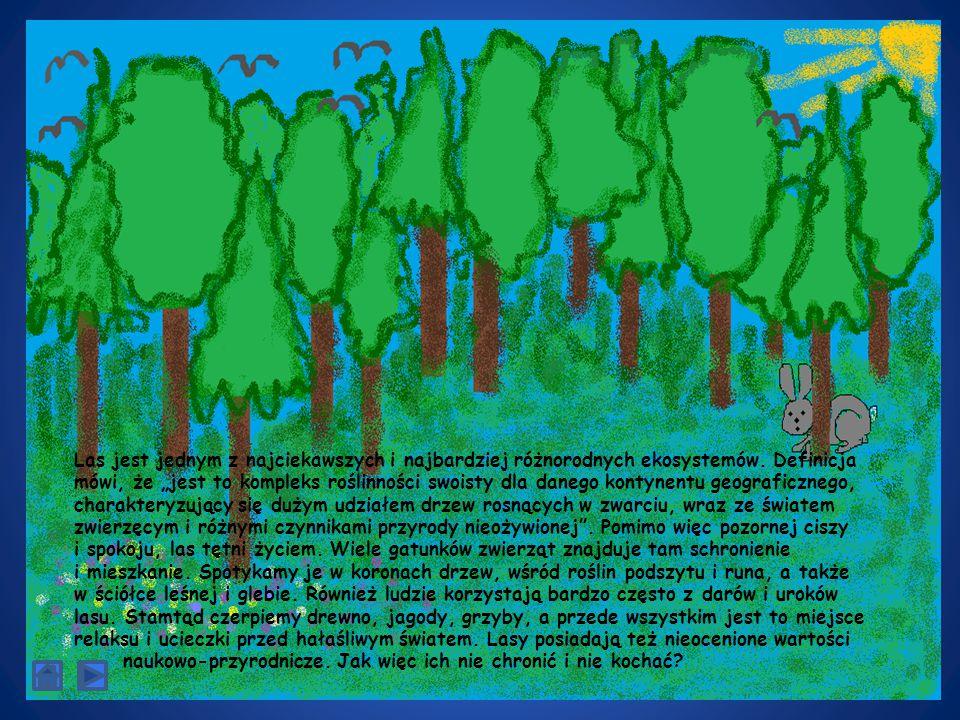 Las jest jednym z najciekawszych i najbardziej różnorodnych ekosystemów.