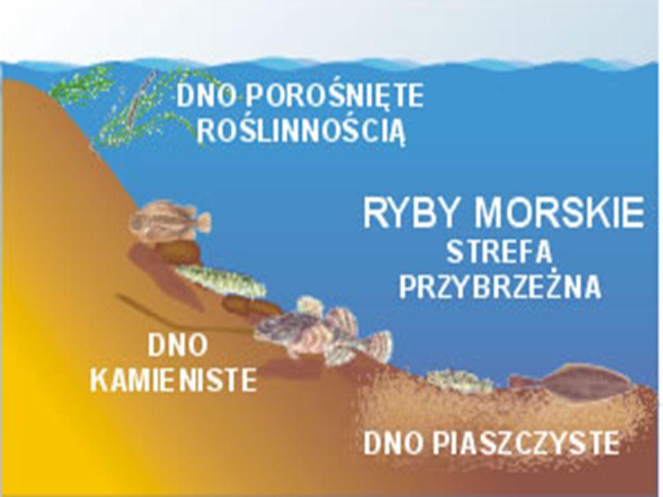 Strefa przybrzeżna Strefa zbiornika wodnego przylegająca do brzegu lądu, jej głębokość nie przekracza 200m ; charakteryzuje się najlepszymi warunkami