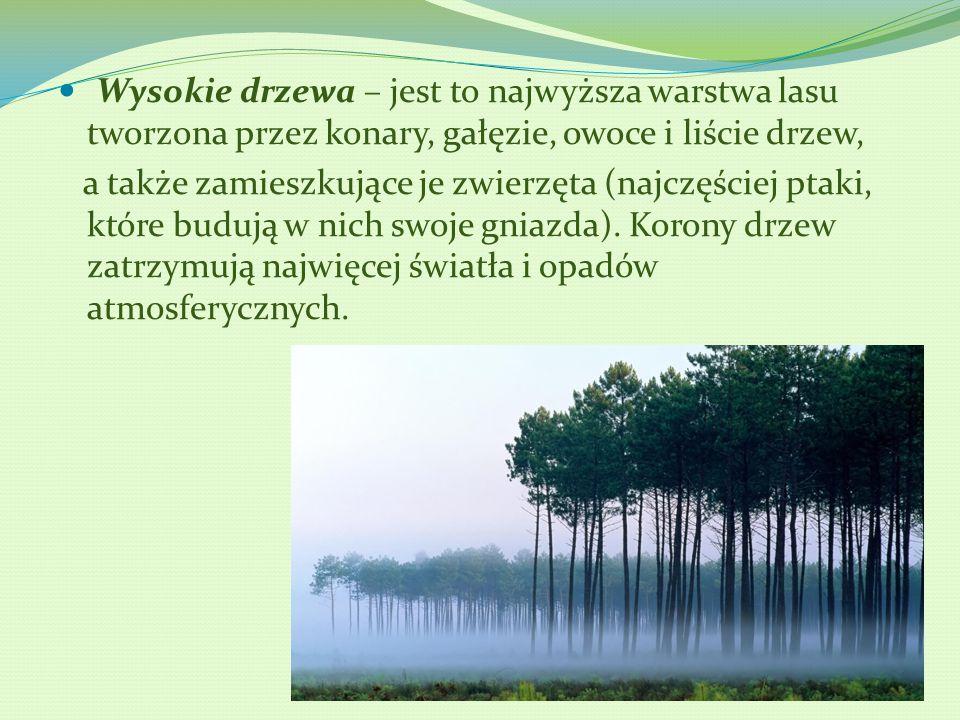Wysokie drzewa – jest to najwyższa warstwa lasu tworzona przez konary, gałęzie, owoce i liście drzew, a także zamieszkujące je zwierzęta (najczęściej ptaki, które budują w nich swoje gniazda).