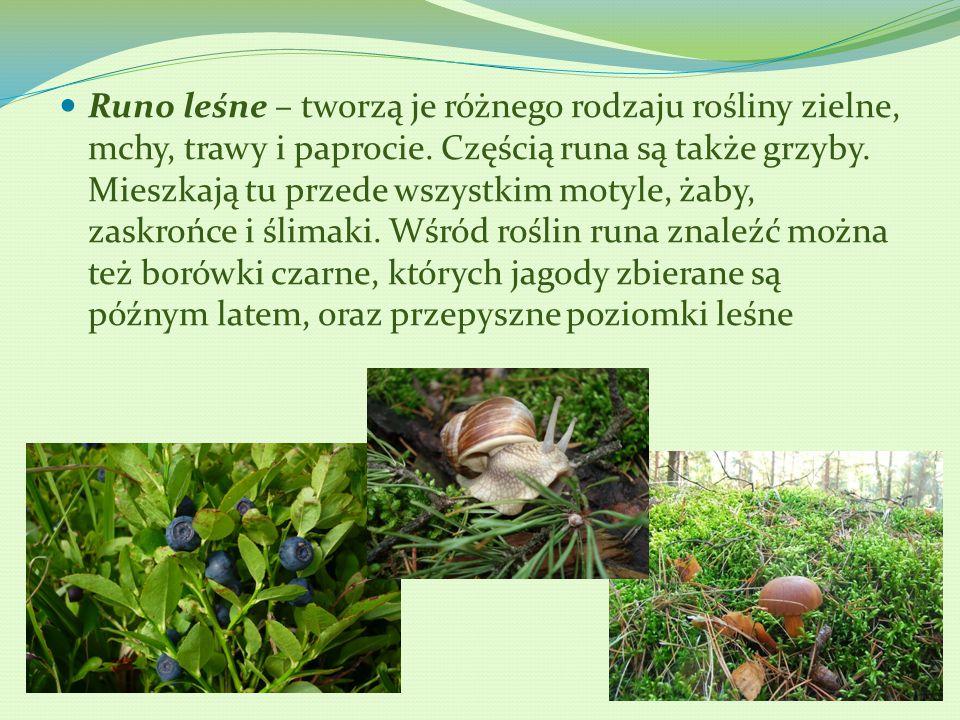 Runo leśne – tworzą je różnego rodzaju rośliny zielne, mchy, trawy i paprocie. Częścią runa są także grzyby. Mieszkają tu przede wszystkim motyle, żab