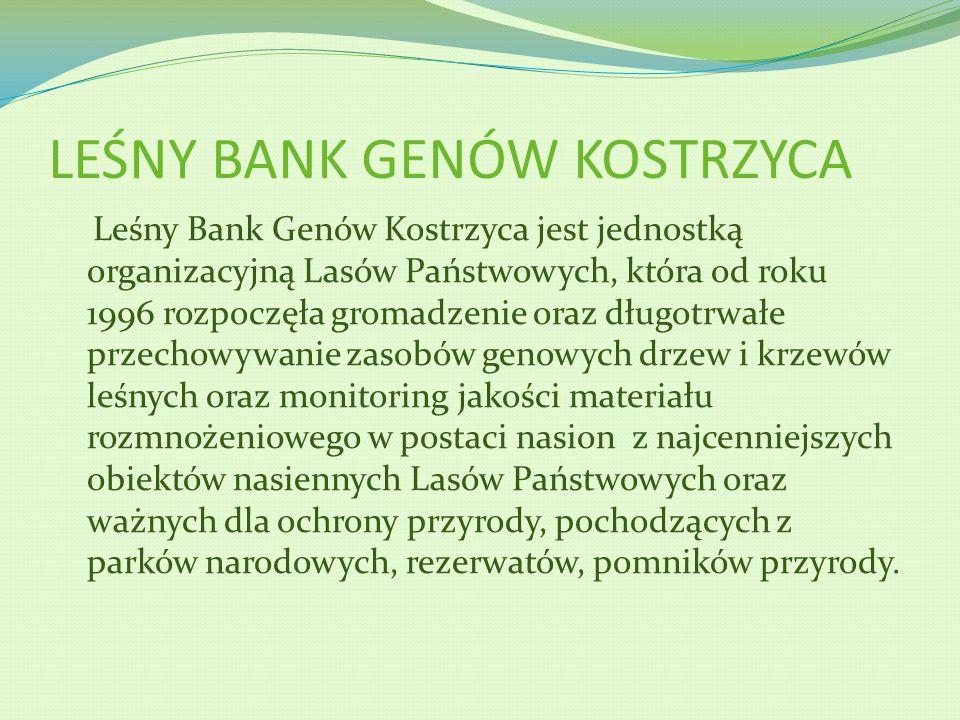 LEŚNY BANK GENÓW KOSTRZYCA Leśny Bank Genów Kostrzyca jest jednostką organizacyjną Lasów Państwowych, która od roku 1996 rozpoczęła gromadzenie oraz d