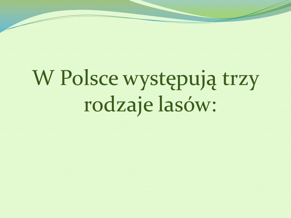W Polsce występują trzy rodzaje lasów:
