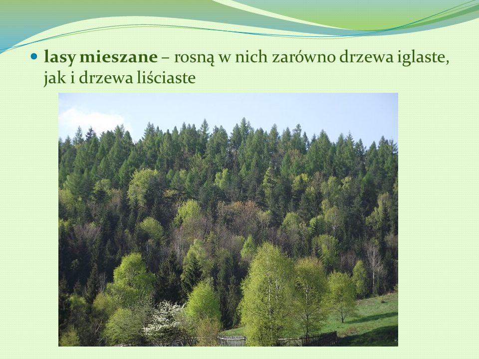 lasy mieszane – rosną w nich zarówno drzewa iglaste, jak i drzewa liściaste