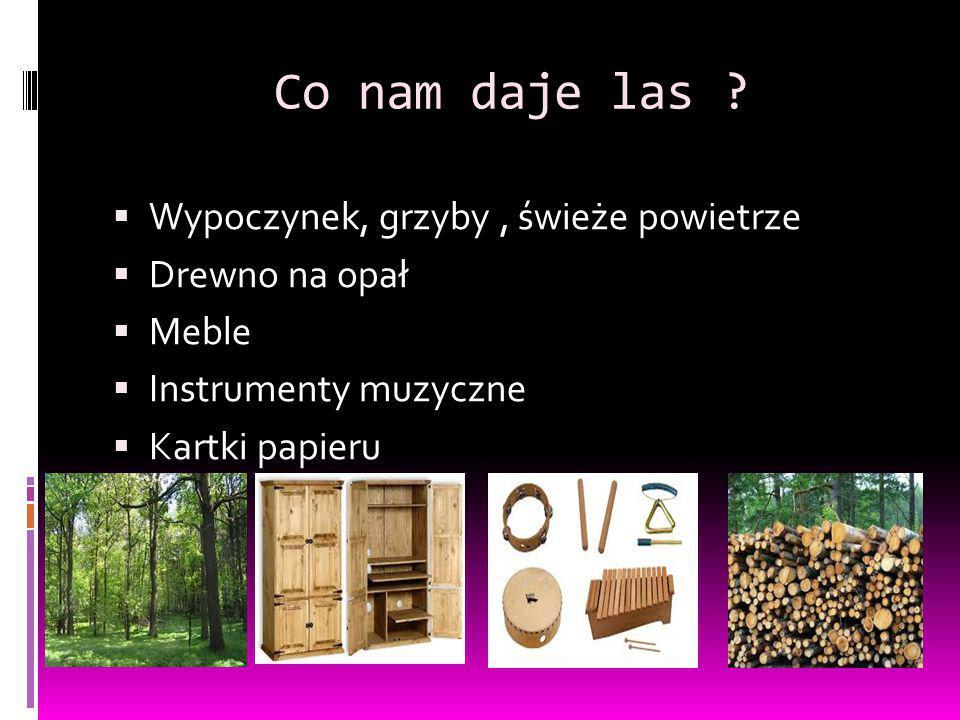Co nam daje las ?  Wypoczynek, grzyby, świeże powietrze  Drewno na opał  Meble  Instrumenty muzyczne  Kartki papieru