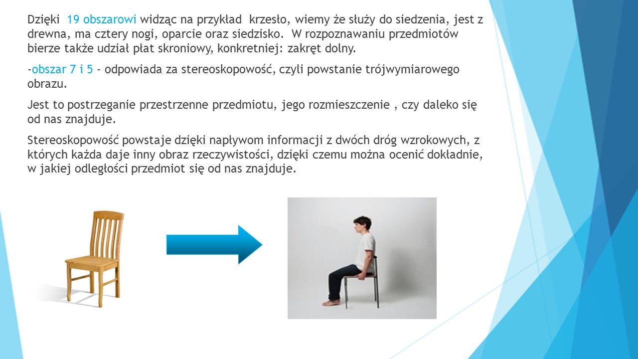 Dzięki 19 obszarowi widząc na przykład krzesło, wiemy że służy do siedzenia, jest z drewna, ma cztery nogi, oparcie oraz siedzisko. W rozpoznawaniu pr
