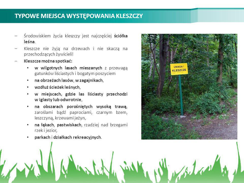 TYPOWE MIEJSCA WYSTĘPOWANIA KLESZCZY –Środowiskiem życia kleszczy jest najczęściej ściółka leśna. –Kleszcze nie żyją na drzewach i nie skaczą na przec