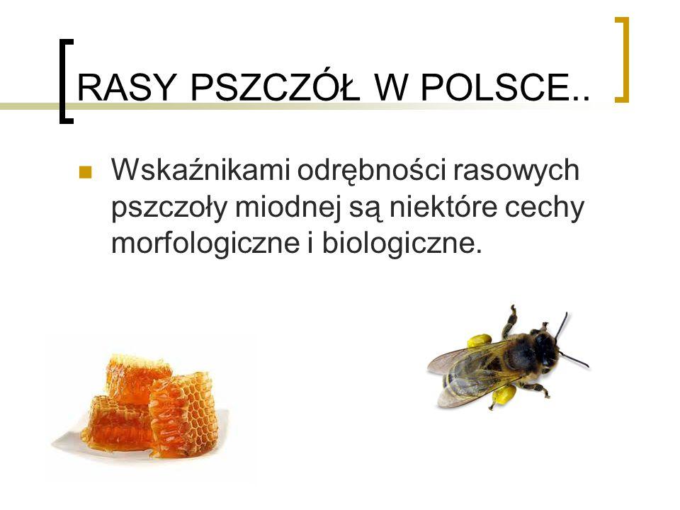 RASY PSZCZÓŁ W POLSCE..