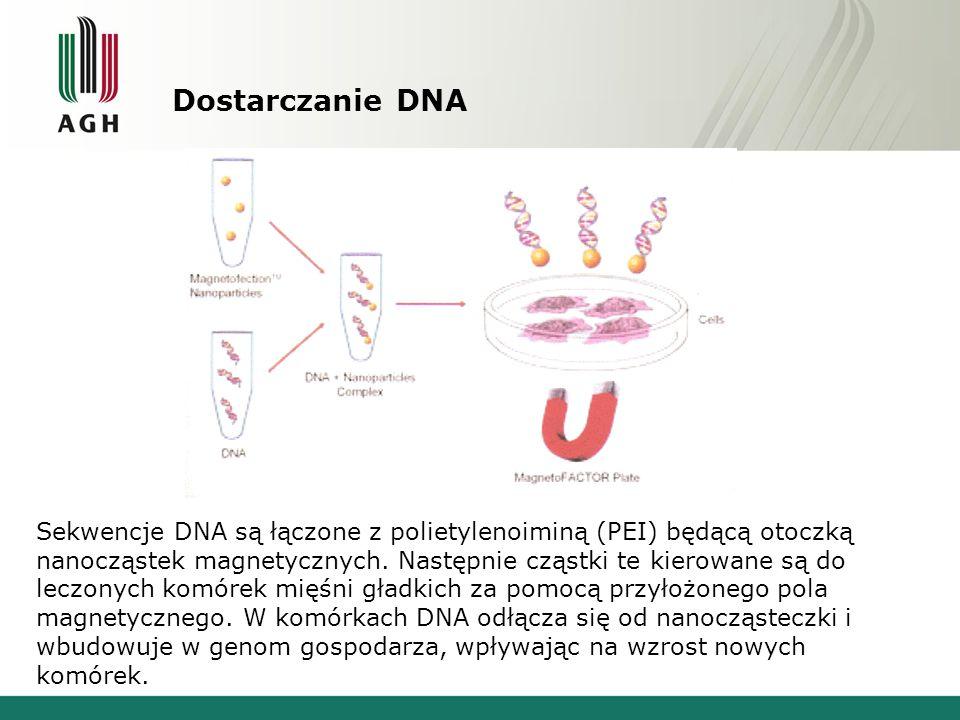 Dostarczanie DNA Sekwencje DNA są łączone z polietylenoiminą (PEI) będącą otoczką nanocząstek magnetycznych.