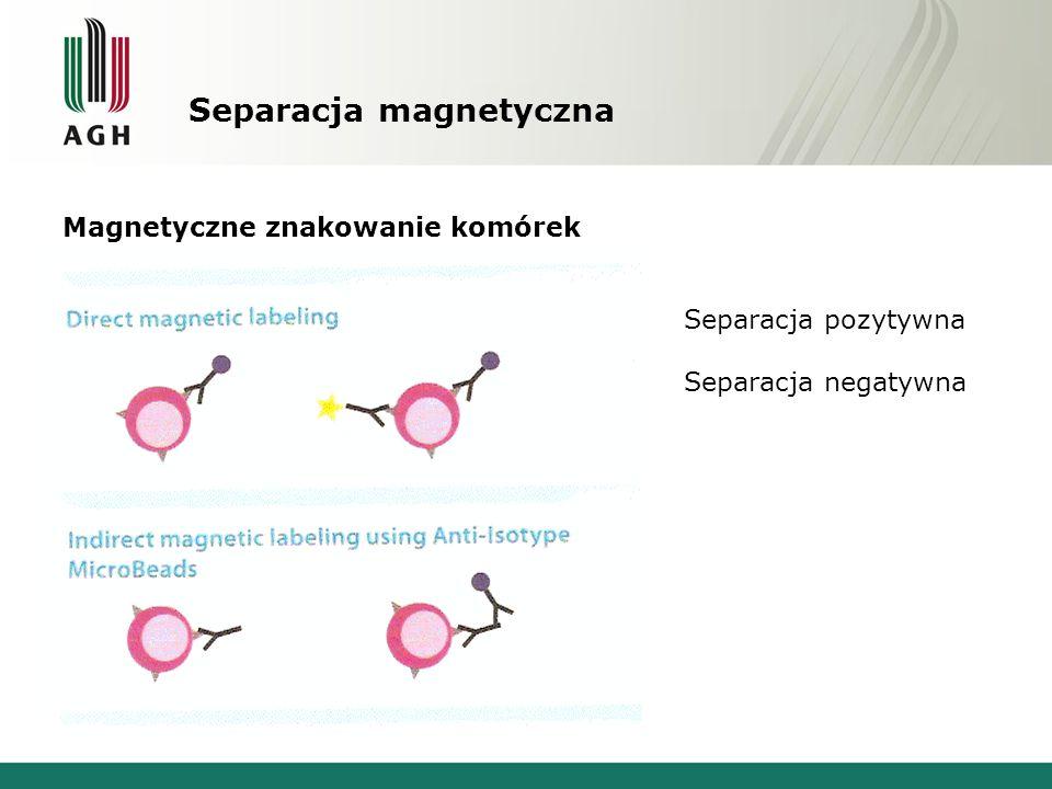 Separacja magnetyczna Magnetyczne znakowanie komórek Separacja pozytywna Separacja negatywna