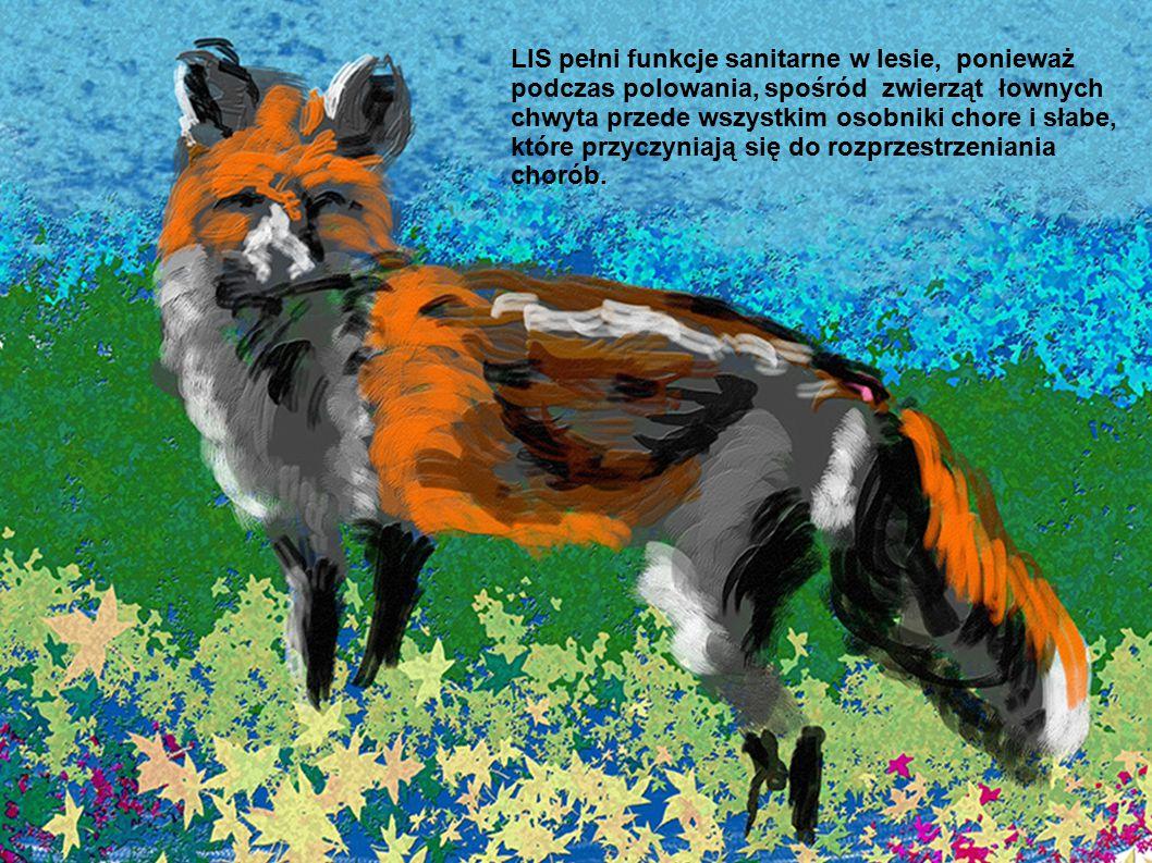 LIS pełni funkcje sanitarne w lesie, ponieważ podczas polowania, spośród zwierząt łownych chwyta przede wszystkim osobniki chore i słabe, które przycz