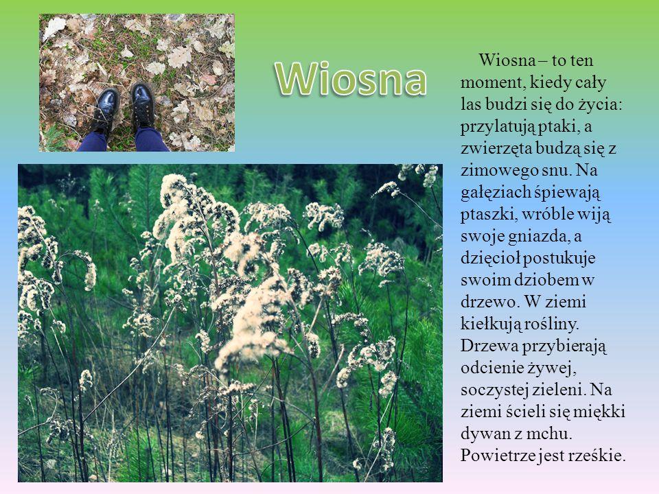 Latem cały las śpiewa: kukają kukułki, ćwierkają wróble, w liściach brzęczą owady, a w trawie cykają świerszcze.