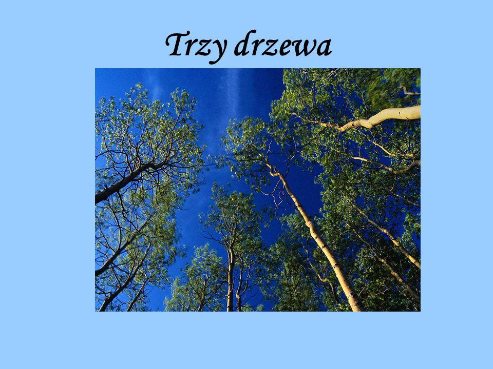 Pewnego razu, na wzgórzu, rosły sobie trzy drzewa.
