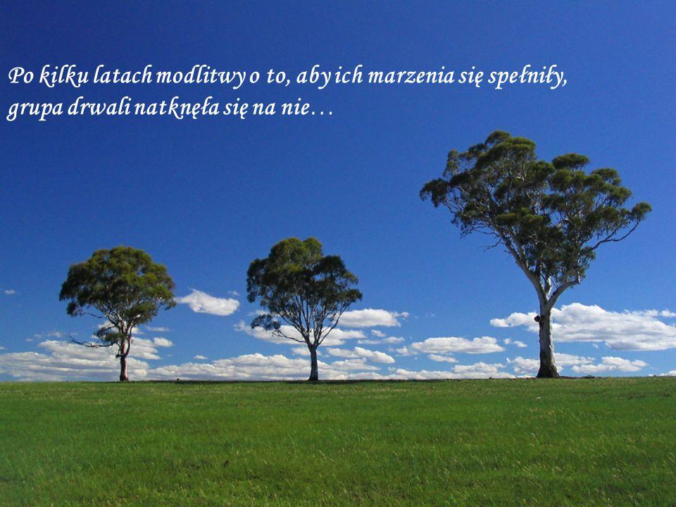 …Kiedy nadeszła niedziela, drzewo zrozumiało, że jest wystarczająco silne, aby stać na szczycie wzgórza i być tak blisko Boga jak tylko to możliwe, ponieważ na nim został ukrzyżowany Jezus.