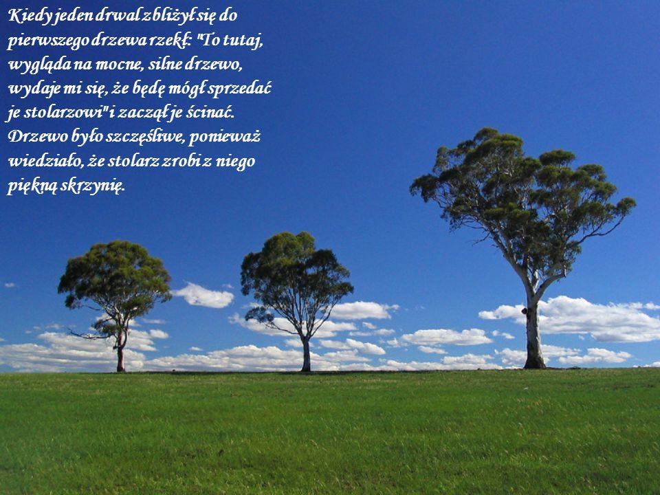 Przy drugim, drwal powiedział: To drzewo również wygląda na mocne, powinienem je sprzedać do stoczni i drugie drzewo również było szczęśliwe, bo wiedziało, że jest to dla niego możliwość stania się potężnym statkiem.