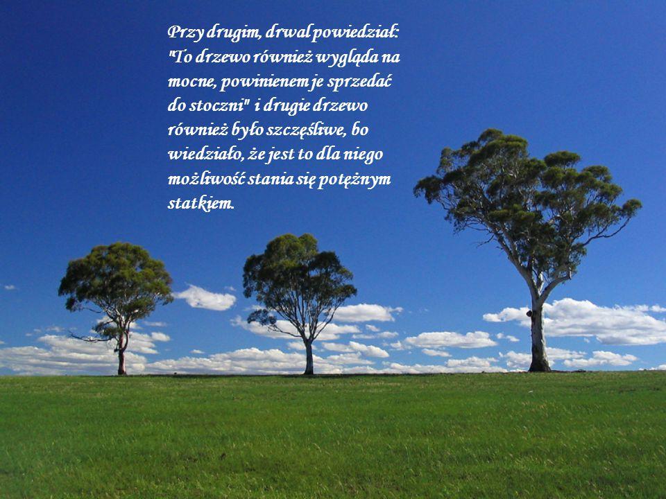 Kiedy drwal podszedł do trzeciego drzewa, drzewo było przerażone, gdyż wiedziało, że jeżeli zostanie ścięte, jego marzenia się nie spełnią.