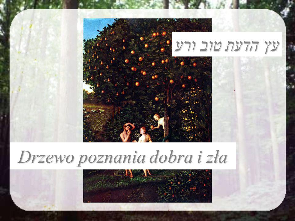 Drzewo poznania dobra i zła עץ הדעת טוב ורע