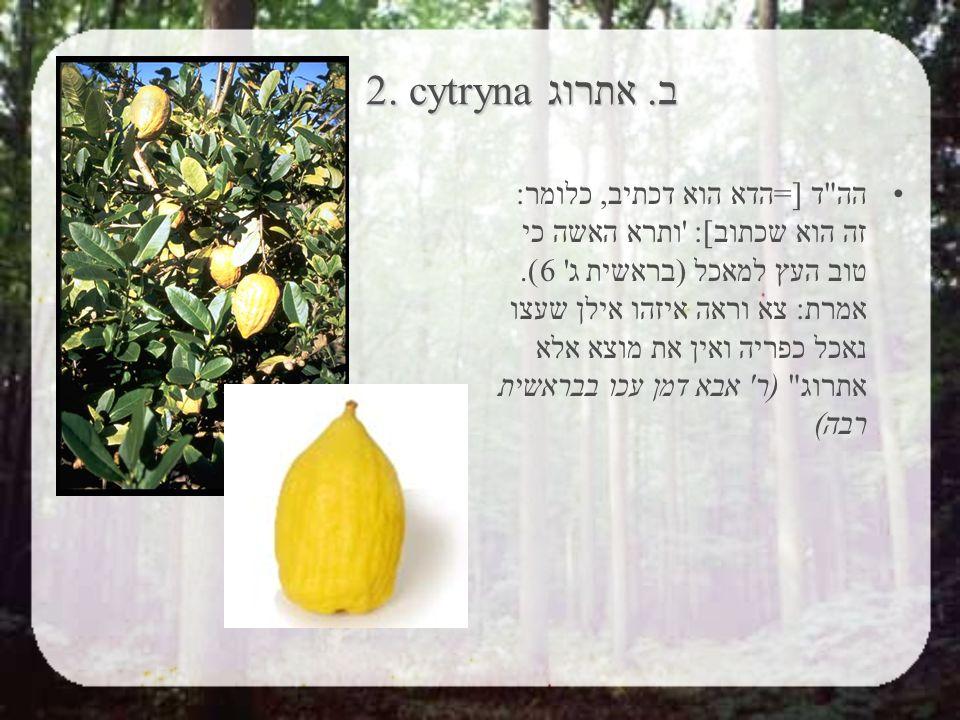 2. cytryna ב. אתרוג 2. cytryna ב.