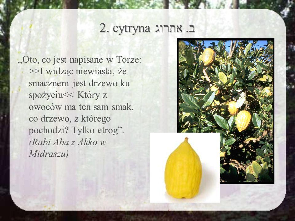 2. cytryna ב.