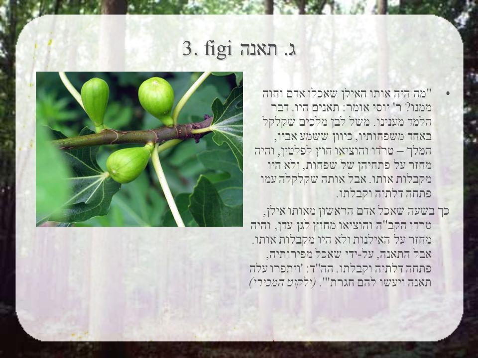 3. figiג. תאנה מה היה אותו האילן שאכלו אדם וחוה ממנו.