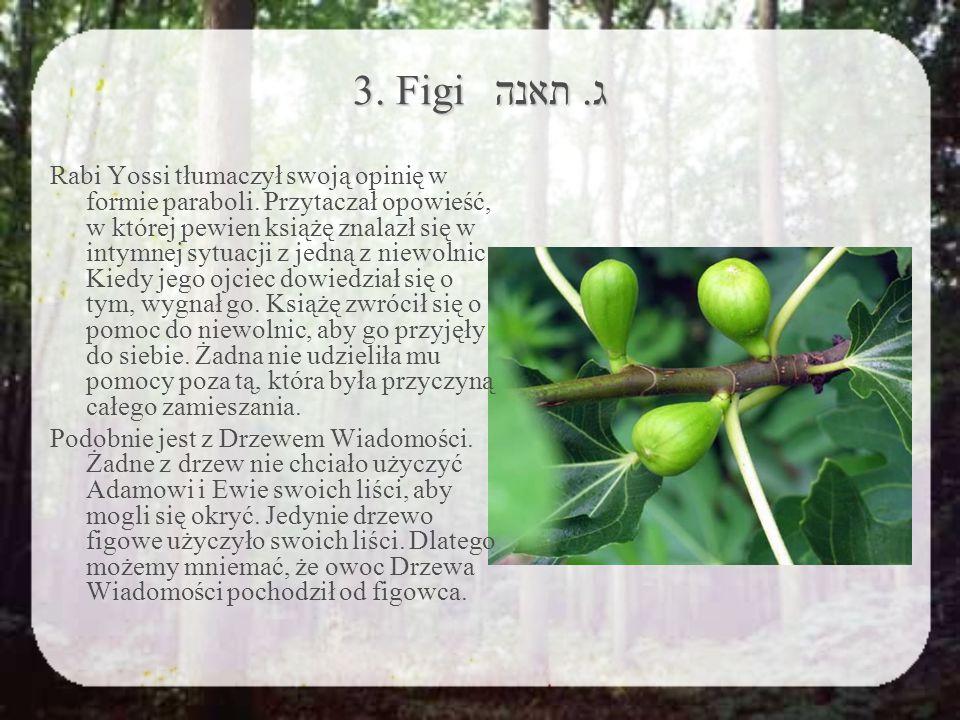 3. Figi ג. תאנה Rabi Yossi tłumaczył swoją opinię w formie paraboli.