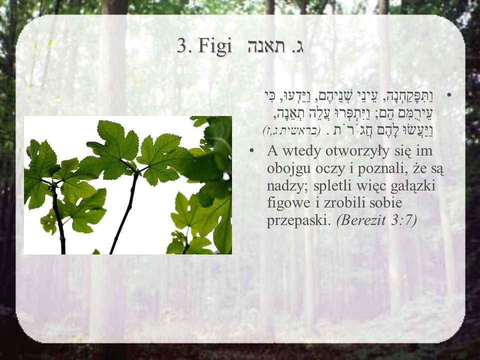 3. Figi ג.