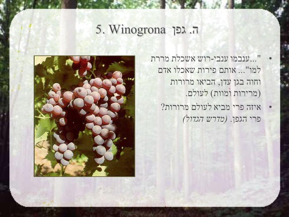 5. Winogrona ה. גפן ...ענבמו ענבי-רוש אשכלת מררת למו ...