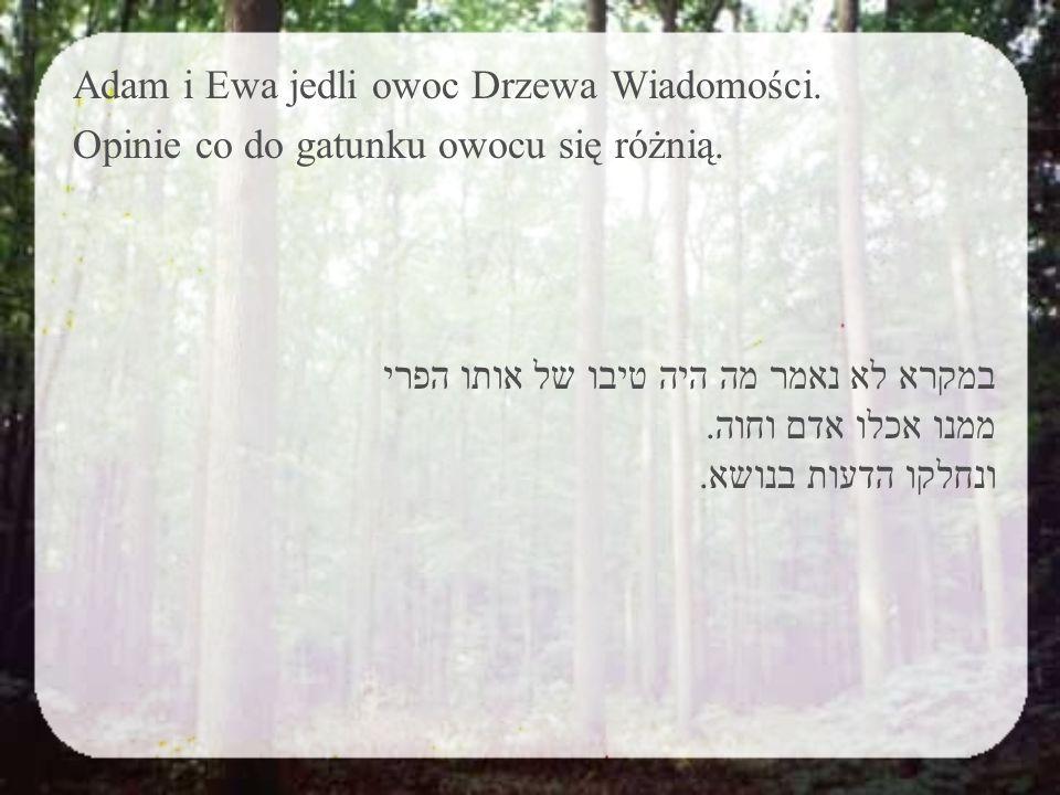 """Rabi Meir powiedział: """"Kiedy człowiek jeszcze niczego nie rozumie, mawiamy, że nie jadł jeszcze zboża (pszenicy). Rabi Szmuel zapytał Rabiego Zeiry: """"Czy możliwe, żeby to była pszenica? Rabi Zeira odpowiedział: """"Tak. Zatem Rabi Szmuel spytał: """"Ale napisane jest, że owoc pochodzi z drzewa? Rabi Zeira odpowiedział: """"Wówczas pszenica była tak wielka jak cedry ."""