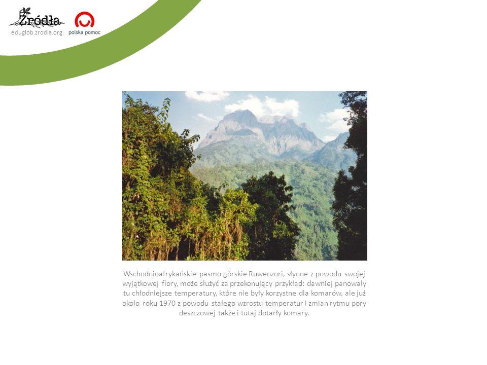 eduglob.zrodla.org Wschodnioafrykańskie pasmo górskie Ruwenzori, słynne z powodu swojej wyjątkowej flory, może służyć za przekonujący przykład: dawnie