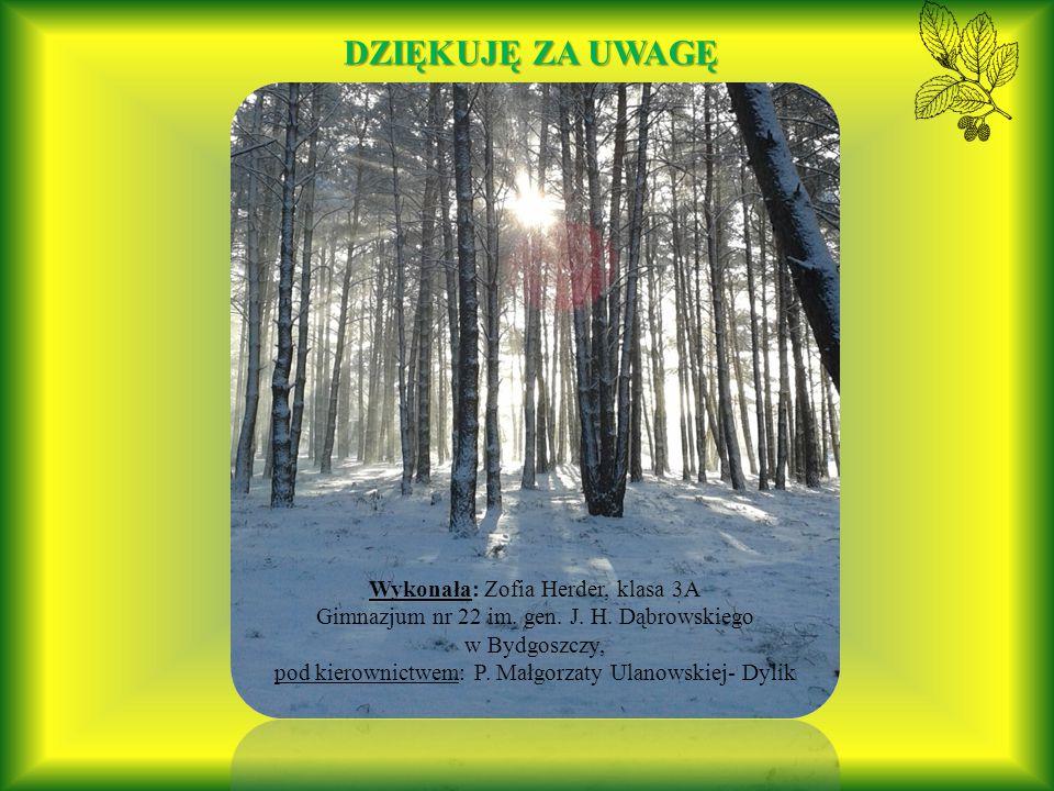 Lasy Nadleśnictwa Bydgoszcz to także ważny korytarz migracyjny dla zwierząt.