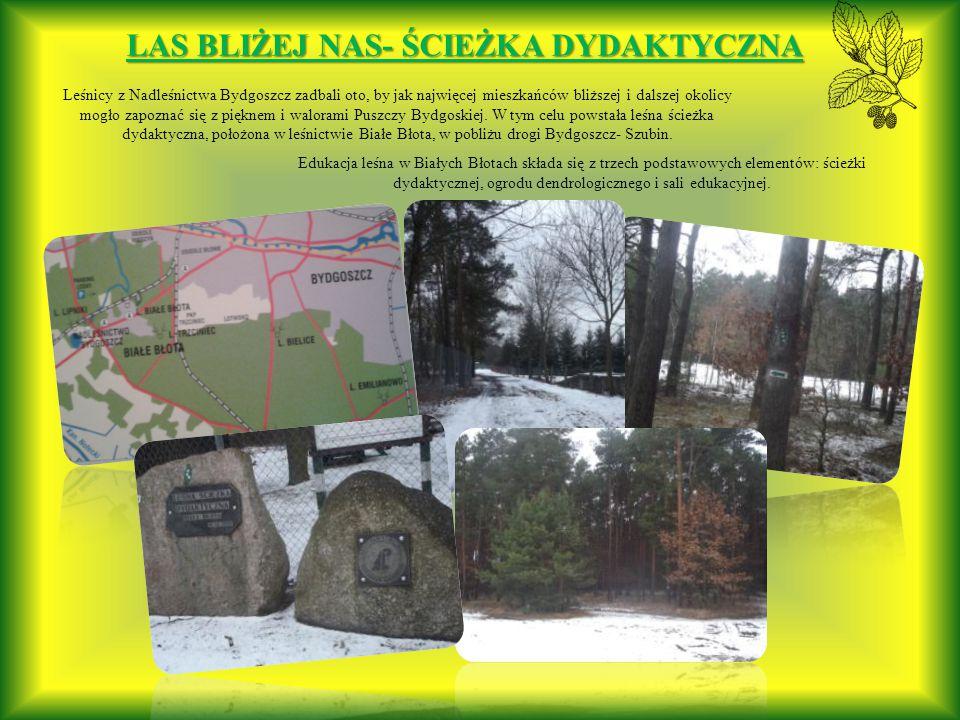 Leśnicy z Nadleśnictwa Bydgoszcz zadbali oto, by jak najwięcej mieszkańców bliższej i dalszej okolicy mogło zapoznać się z pięknem i walorami Puszczy Bydgoskiej.