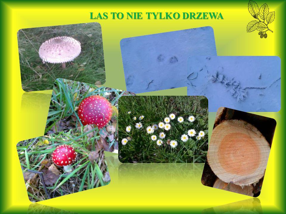 Puszcza Bydgoska to nie tylko las sosnowy.