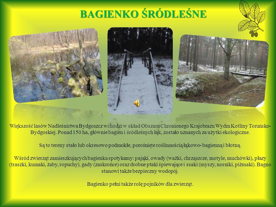 Większość lasów Nadleśnictwa Bydgoszcz wchodzi w skład Obszaru Chronionego Krajobrazu Wydm Kotliny Toruńsko- Bydgoskiej.